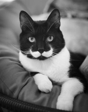 chat-moustache_convert_20150105030011.jpg