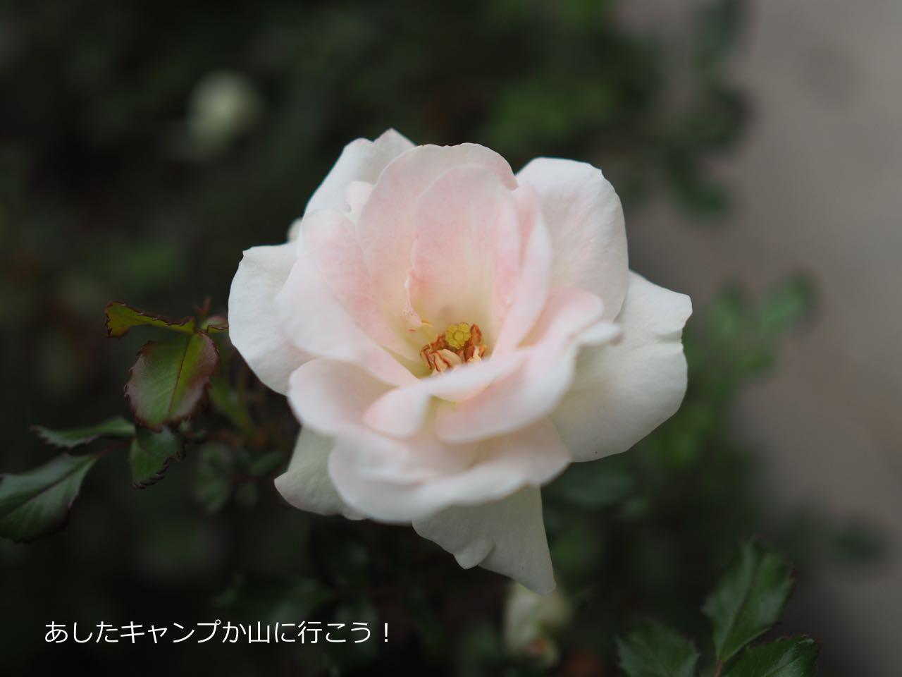 20150410232813ad2.jpg