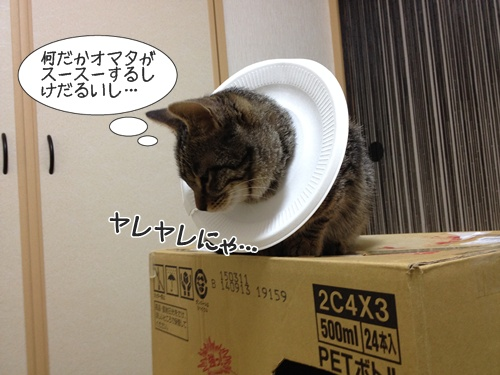 20150117233816de2.jpg