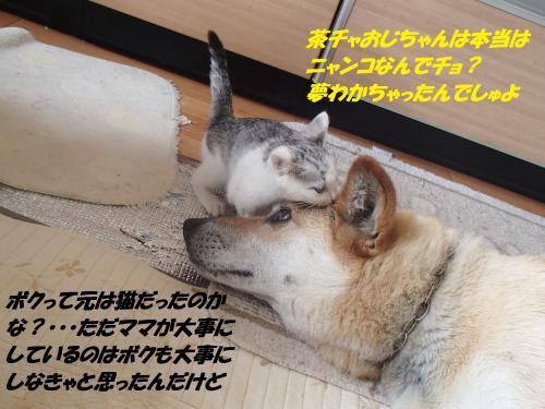 P6190295_convert_20150620091240.jpg