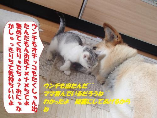 P6190296_convert_20150620091254.jpg