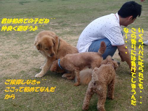 P6210323_convert_20150622090852.jpg