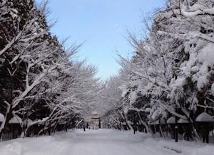 ホワイトクリスマスだよ