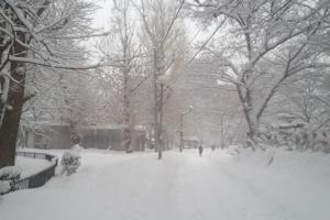 毎日のように雪