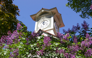 ライラックと時計台