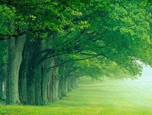 緑深まる頃