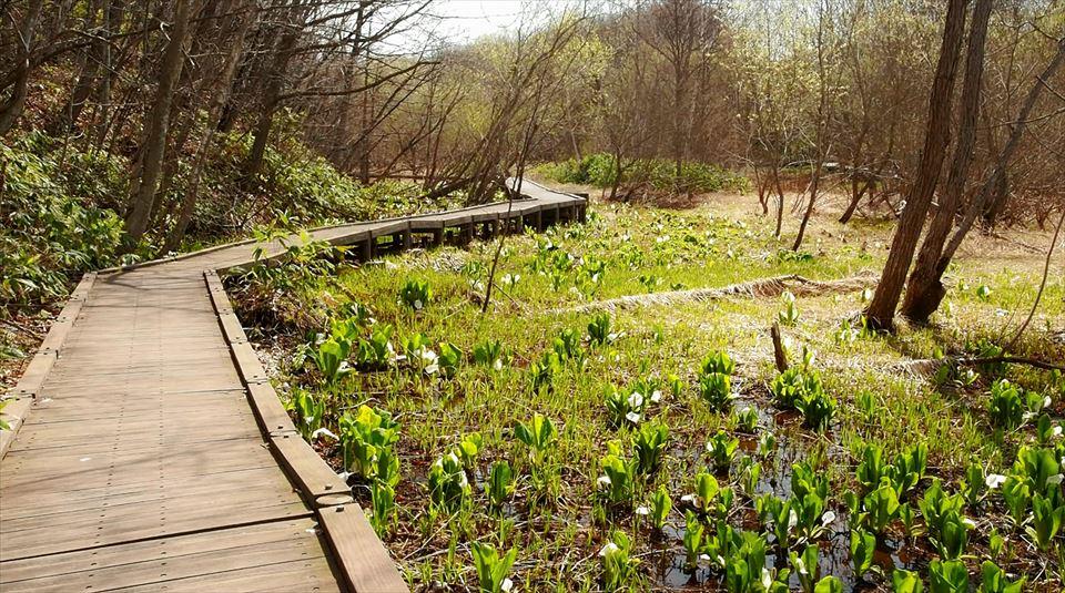 hiraoka-park-woodway.jpg