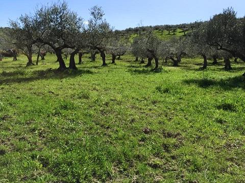 2015アサクラ農園の様子(1)