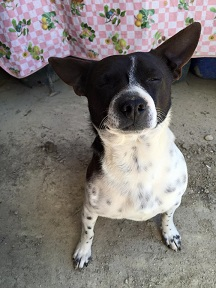 2015アサクラ農園の様子(6)犬