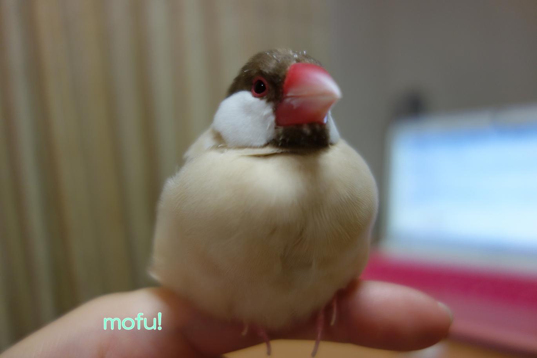 mofu!.jpg