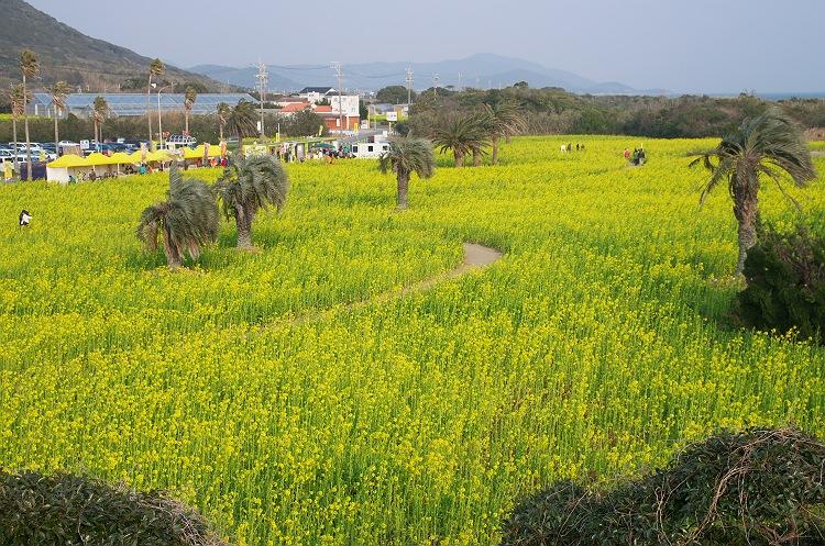 伊良湖は春近し