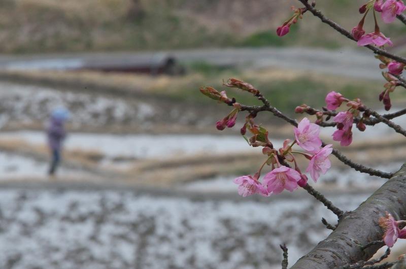 棚田で見つけた小さな春 2