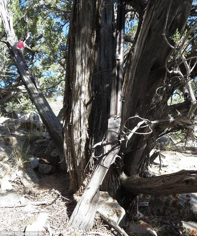 どうして? 国立公園の木に立て掛けられたままだった132年前のライフルが発見される
