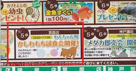 かしわ餅試食会3