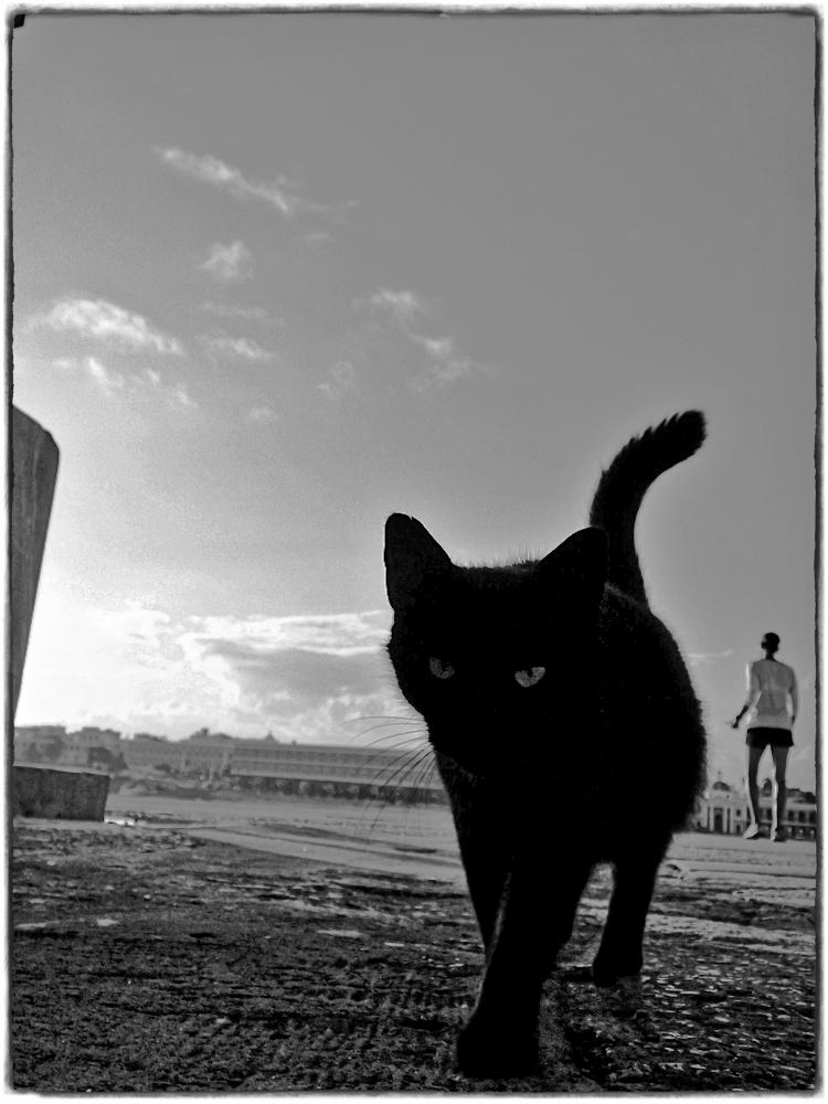 第272話 オールド・サンファン(5)野良猫(2013年、プエルトリコ)