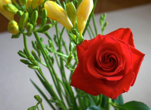 s-627-1赤いバラとフリージア