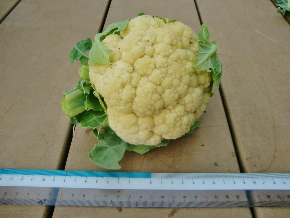150104cauliflower