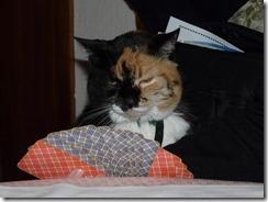 cat-55510_640