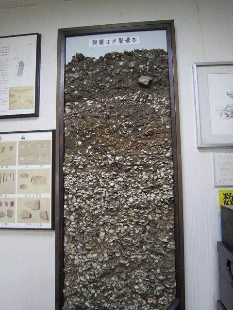 石山 貝塚標本