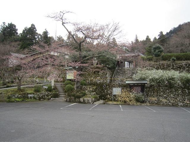 百済寺 桜