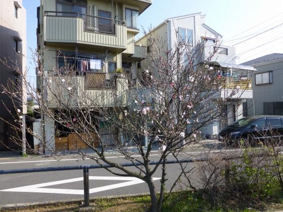 SAKURA2015江川せせらぎ遊歩道24