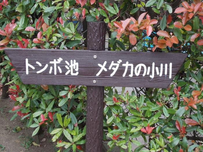 DSCN1033_01.jpg