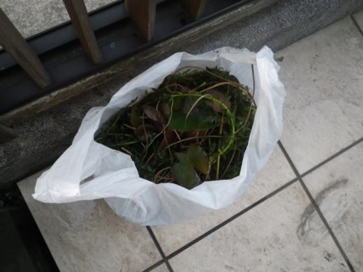 水草 (3)