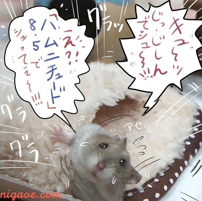 え?! ハムニチュード8.5でシュってぇ〜!!!