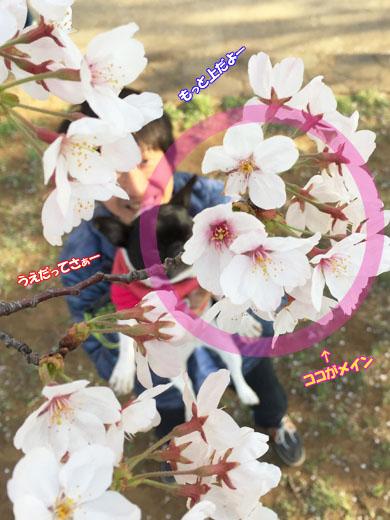 20150407153520ed1.jpg