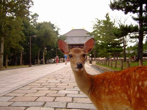 奈良公園の鹿 注目