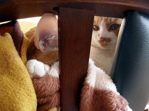 ひっそり 隠れ 猫