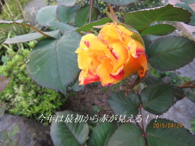 IMG_1039B.jpg